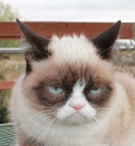 Sadly, Grumpy cat grumpily rejected the offer to play the cat ball.